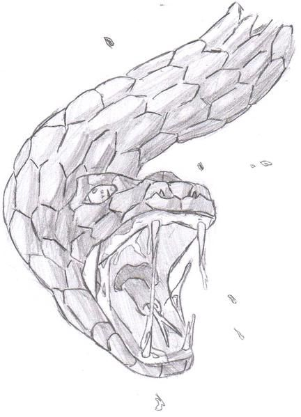 Comment dessiner un serpent - Tete de serpent dessin ...